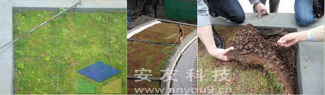 净化雨水,可生物降解,适用于任何种类的屋顶及斜坡,夏天隔热,冬天保暖