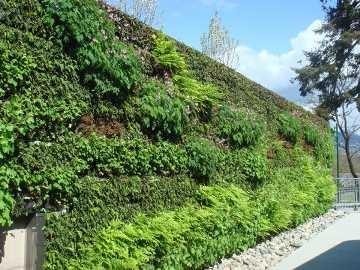 室外景观墙面绿化工程