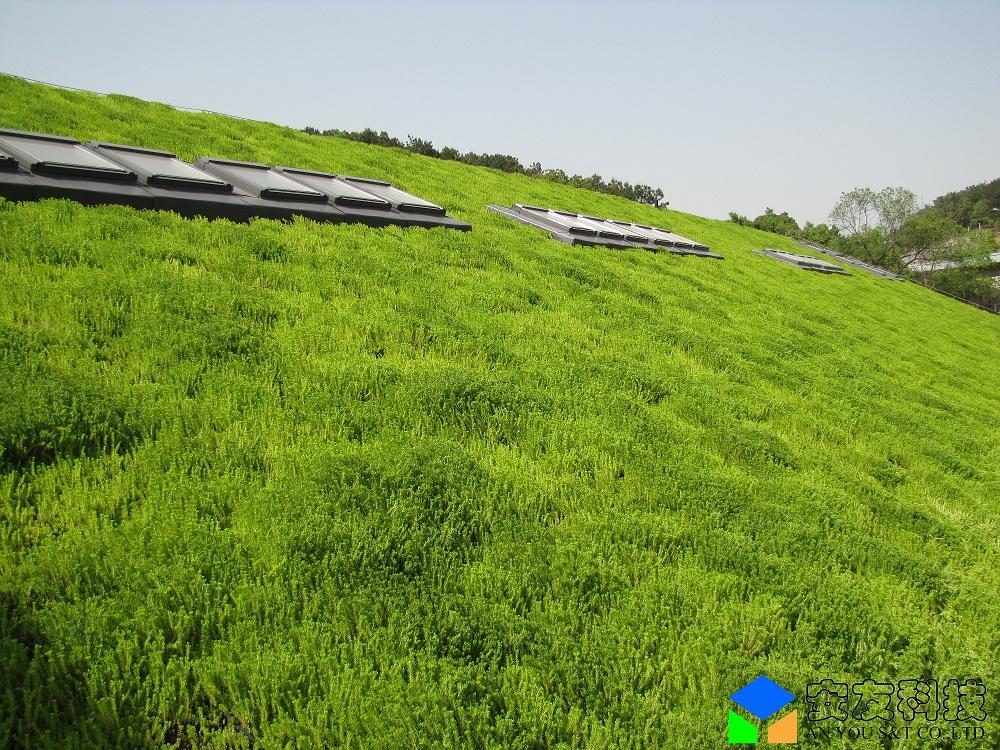 屋顶绿化示意图